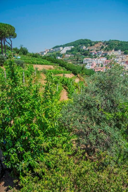 Gallery images Villa Carrubo Vietri sul Mare – Amalfi  Coast
